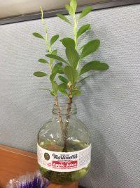 BBS 수중식물_초록이